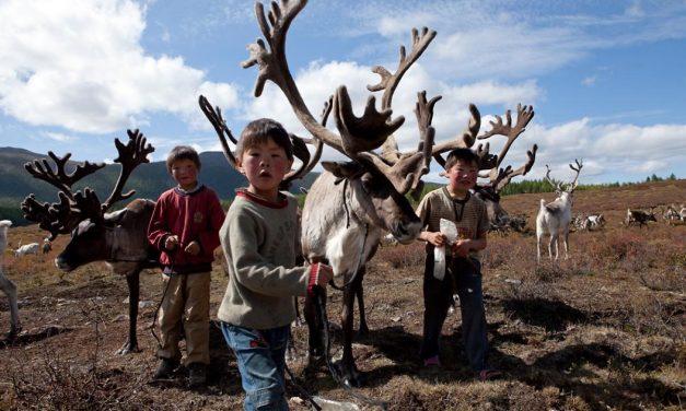 الثروة الحيوانية في منغوليا: بين تهديدات المناخ والأطماع الدولية