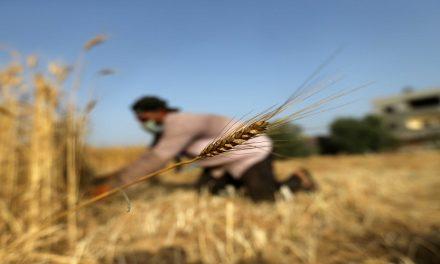 الإستثمار الزراعي.. بوابة إسرائيل للهيمنة على مقدرات السودان
