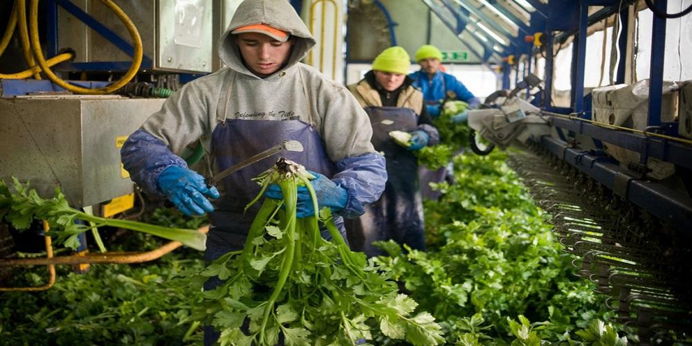 """بعد """"بريكست"""": هل تُصبح الزراعة أكثر حفاظاً على البيئة بدون الإتحاد الأوروبي؟"""