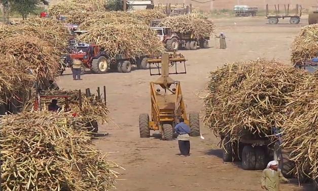 الزراعة في مصر: بين ندرة المياه وتراجع أسعار المحاصيل